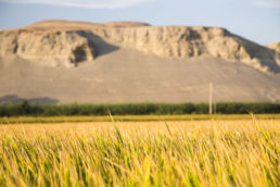 Wüste, Meer und Reis